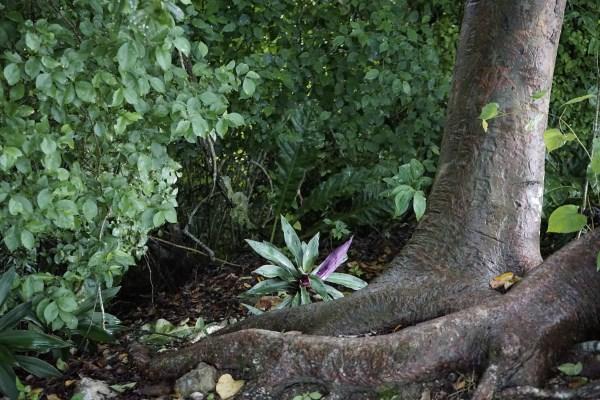 Fauna des Regenwalds