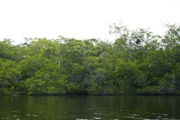 auf dem New River unterwegs - Blick auf die Fauna am Ufer
