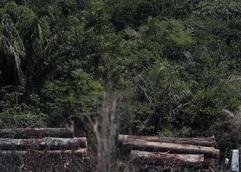 Un camión transporta madera obtenida ilegalmente en la selva amazónica.   EFE