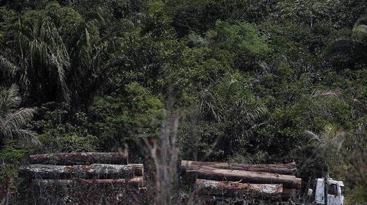 Un camión transporta madera obtenida ilegalmente en la selva amazónica. | EFE