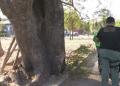 El hombre fue atropellado mientras colgaba un letrero en un árbol (UNITEL)