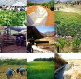 AGRO: Factores propios y externos frenan las venta de soja