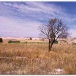 AGRO: Desesperación de los productores agropecuarios