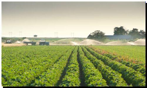 AGRO: Tecnología de procesos. Más terneros para la ganadería argentina