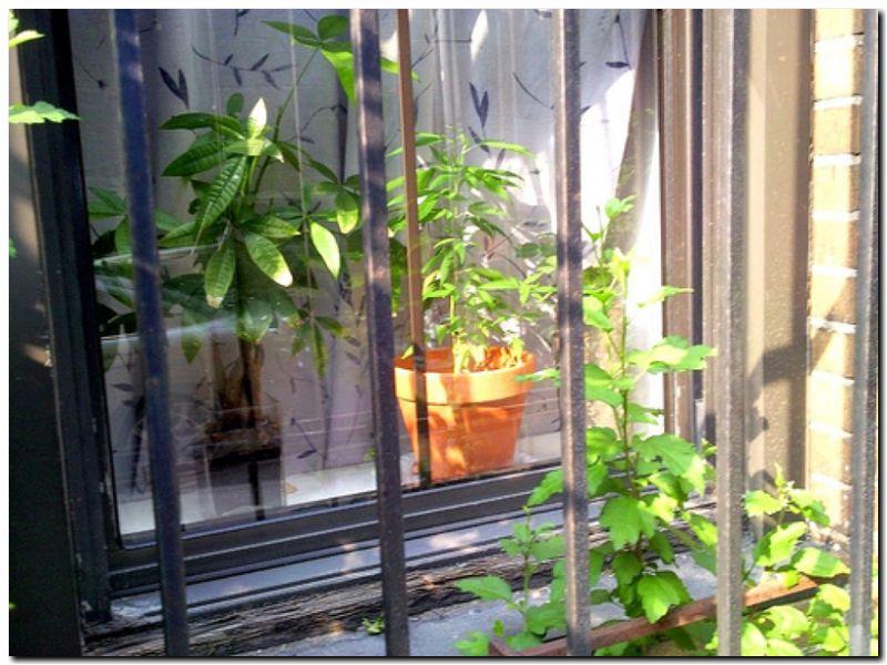 FALLO: De marihuana ilegal a medicina cannábica