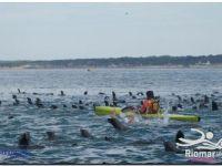 Preguntas y dudas sobre la competencia Río Mar