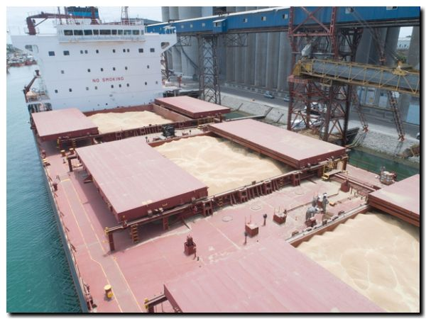 Puerto Quequén continúa activo y competitivo operando sus cargas a través del corredor sanitario portuario