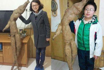 Encuentran yuca que se parece a Groot