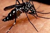 Se incrementan los casos de dengue en RD