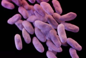 """""""Superbacteria"""" hallada en EEUU podría dar inicio al fin de los antibióticos"""
