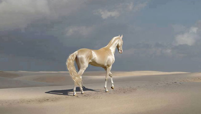 l caballo más bonito del mundo, una especie con solo 1.250 ejemplares