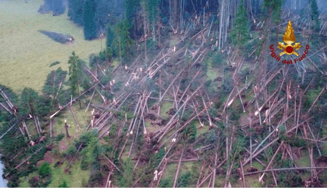 Se perdieron millones de árboles. (Bomberos)