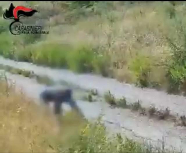 El pirómano captado in fraganti (Foto: Twitter Arma dei Carabinieri)