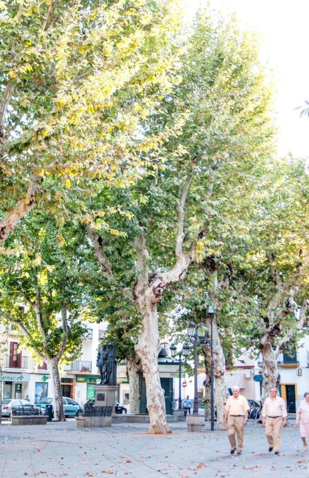 Sevilla-San-Lorenzo-5