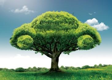 Cómo ser un conductor ecológico y ahorrar combustible