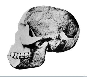 "M0013579 Skull of the ""Eoanthropus Dawsoni"" (Piltdown Man) Credit: Wellcome Library, London. Wellcome Images images@wellcome.ac.uk http://wellcomeimages.org Skull of the ""Eoanthropus Dawsoni"" (Piltdown Man) Published: - Copyrighted work available under Creative Commons Attribution only licence CC BY 2.0 http://creativecommons.org/licenses/by/2.0/"
