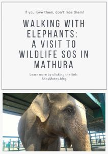 Walking With Elephants - A Visit To Wildlife SOS In Mathura