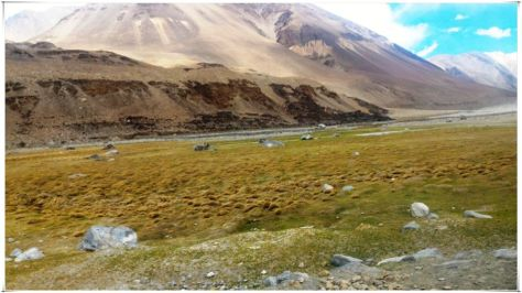 Marshes and wetlands formed by the streams that feed Pangong Tso