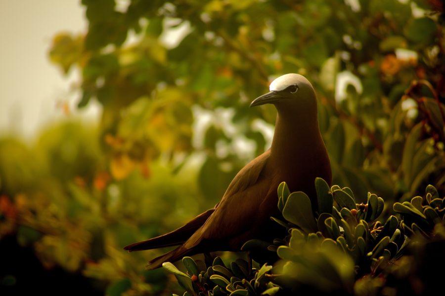 Great Bird Island, Antigua and Barbuda