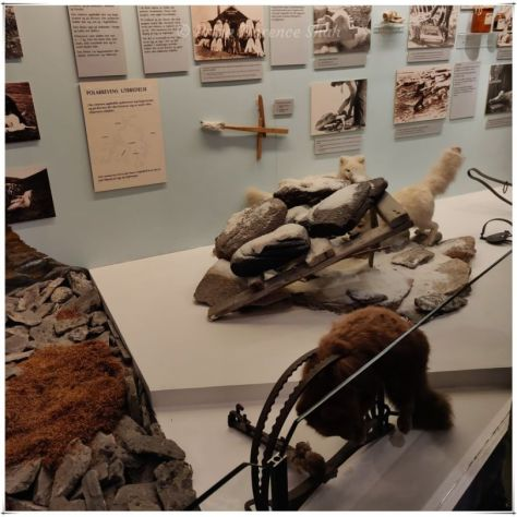 A rather distressing exhibit on animal trapping