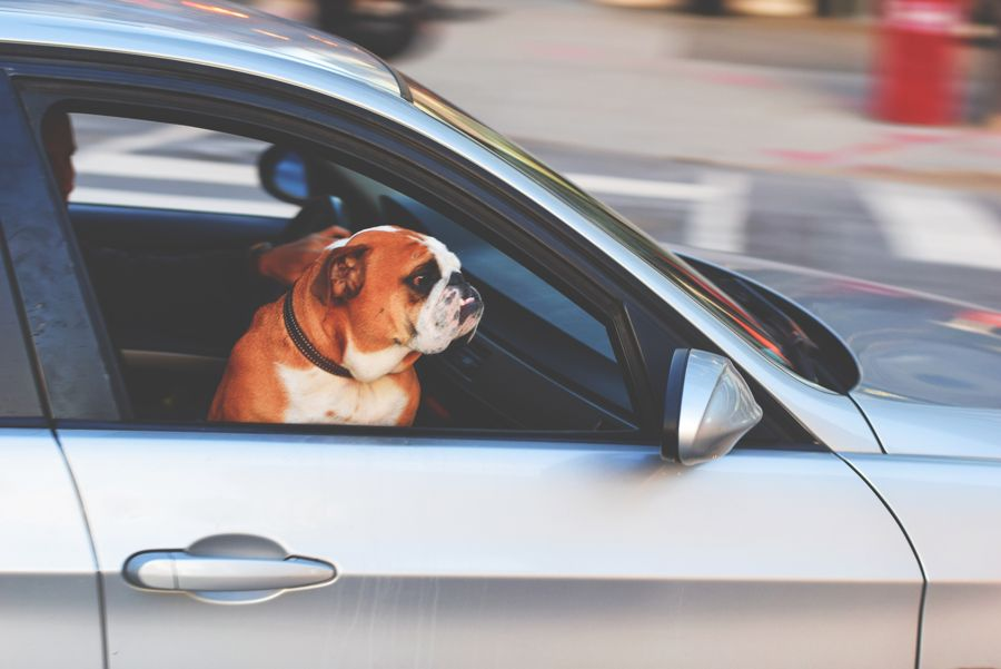 Road Travel With Your Dog