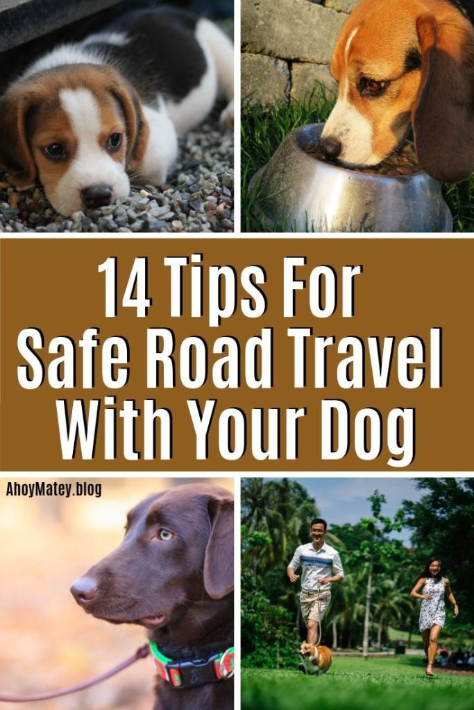 14 Tips For Safe Road Travel With Your Dog