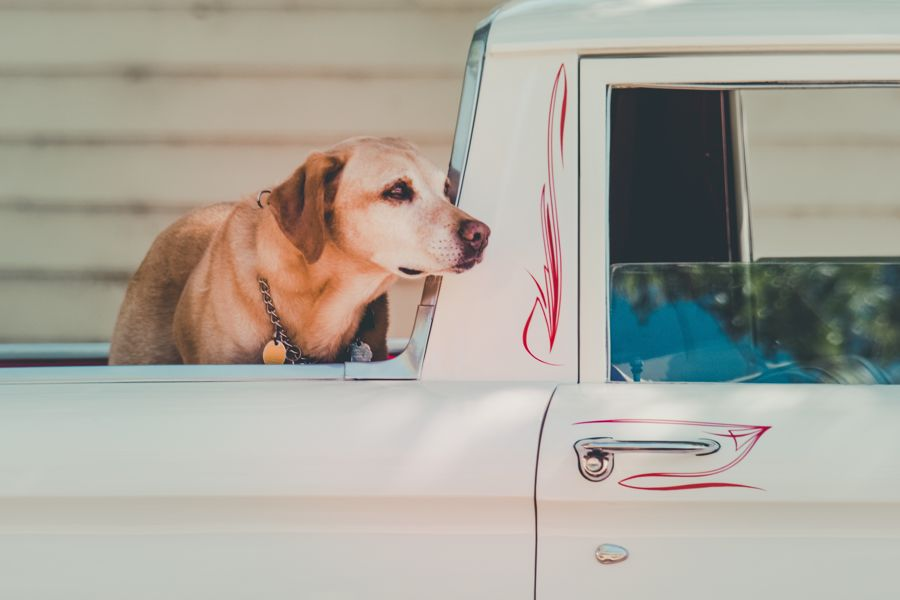Travel With Pets Dogs