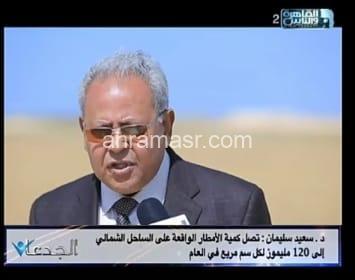 نجاح زراعة أول قمح مصرى على مياه الأمطار بدون أسمدة والإنتاجية مذهلة