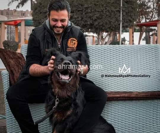 أرض الخيل تنظم مهرجان الرحمة بالحيوان بنادي فروسية مدينة نصر.. الجمعة