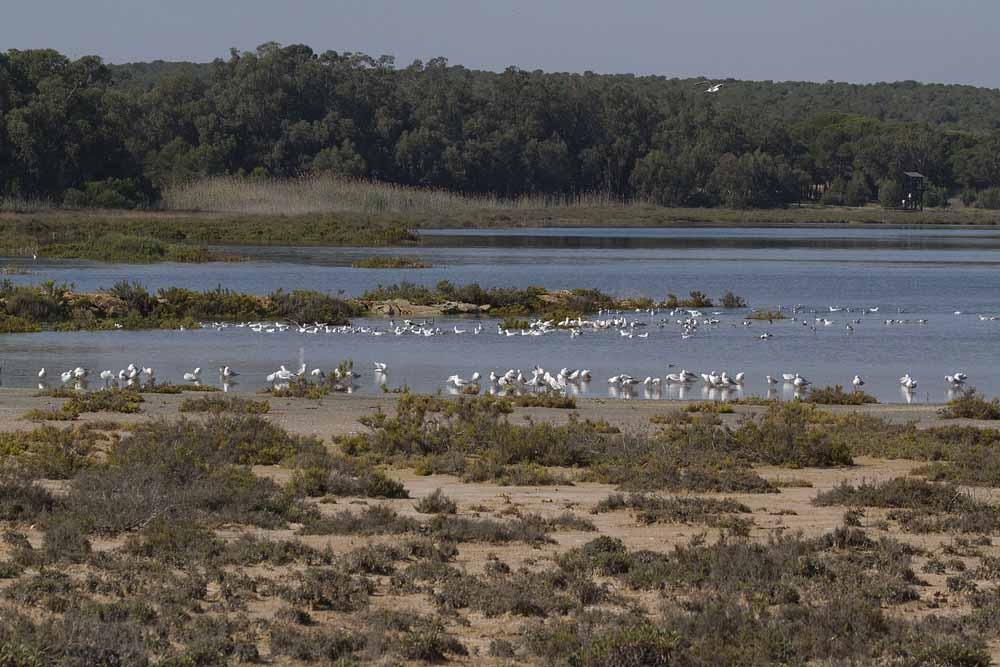 Playa del acequión (S. Arroyo)
