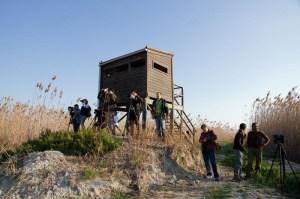 Observando aves desde un observatorio en El Hondo