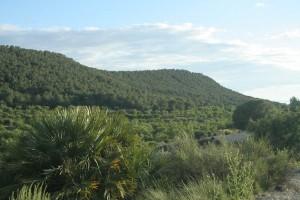 Paisaje de la umbría de Sierra de Esalona (P. Perales)