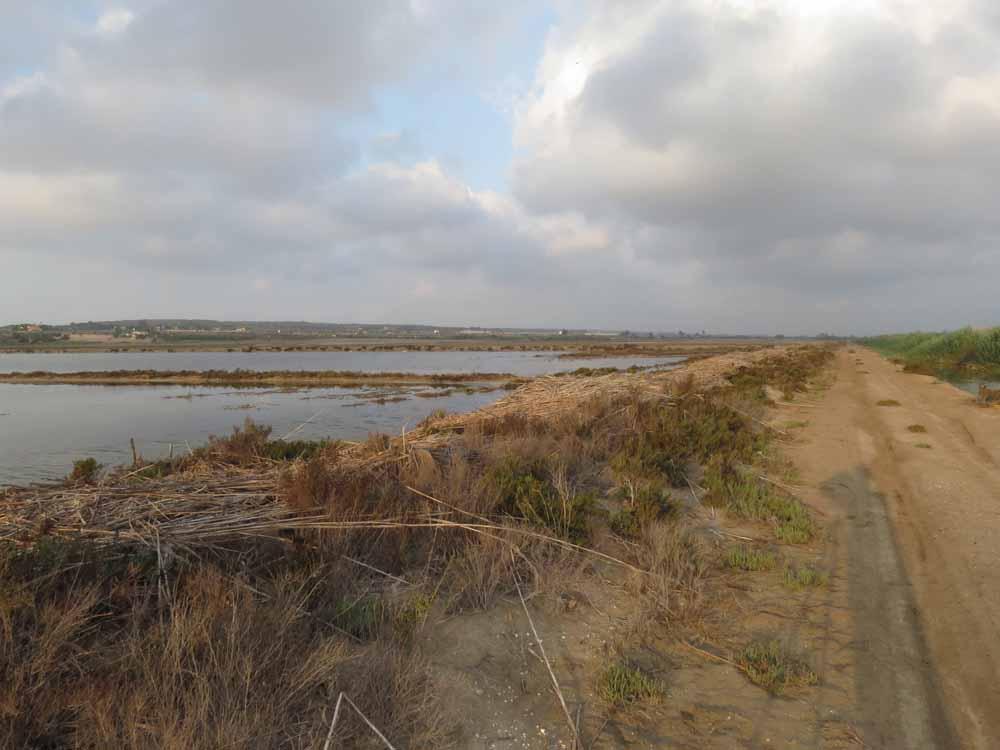 Salinas de Santa Pola
