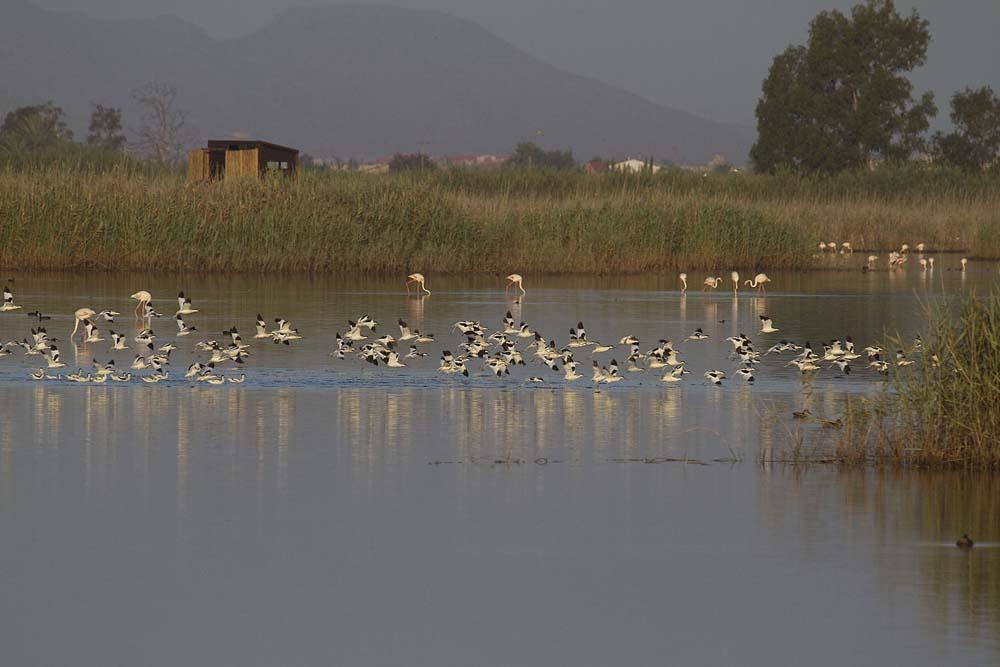 Reserva de El Hondo (S. Arroyo)