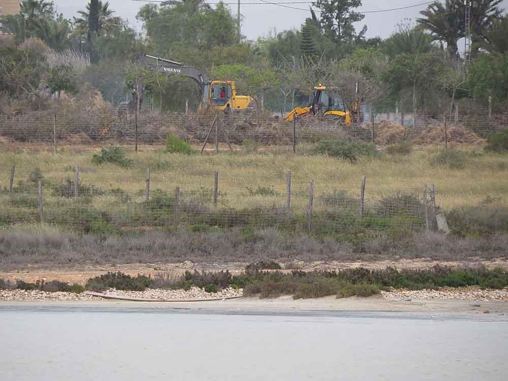 Desbroce de la vegetación en la parcela junto a las salinas del Pinet, donde la Consellería de Medio Ambiente ha autorizado la instalación de un camping