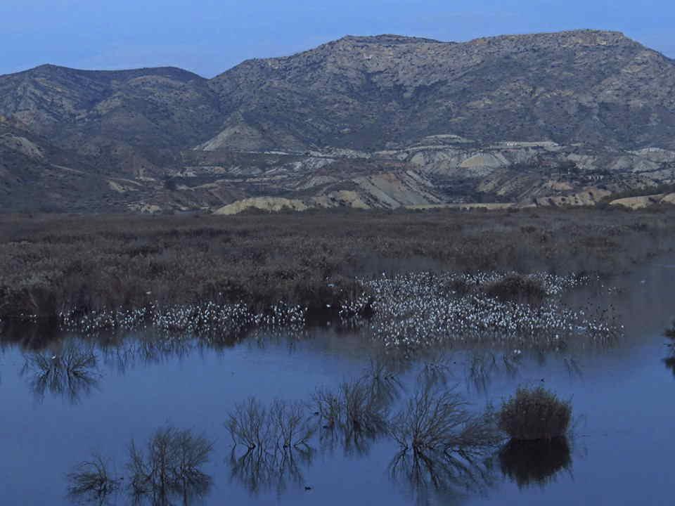 Dormidero de garcillas en el Pantano de Elche (O. Aldeguer)