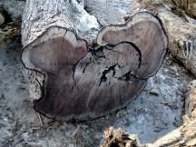 Wood B