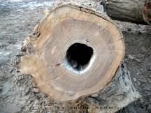 Wood F
