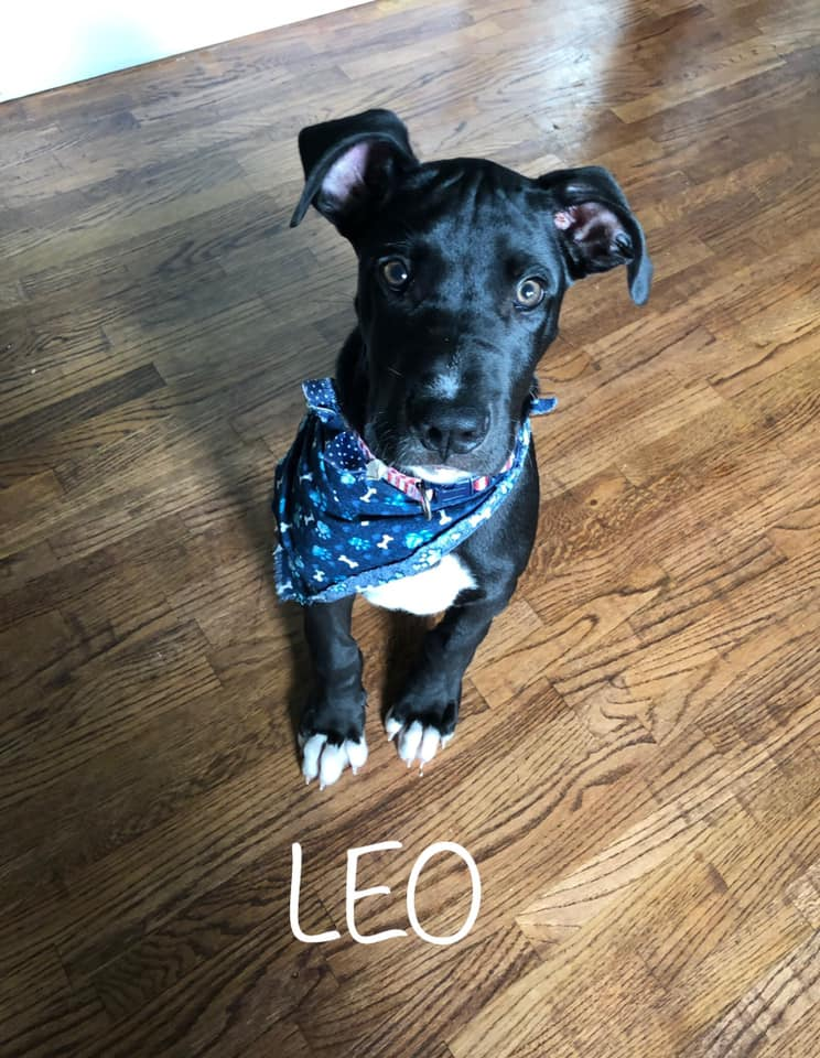 Our Puppy Leo