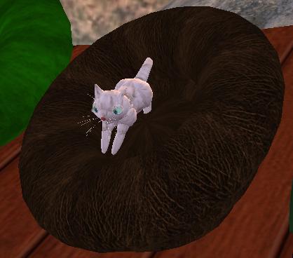 alert-kitty