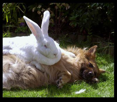 bunnmy-and-dog