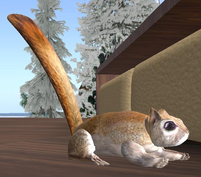 cnp-squirrel