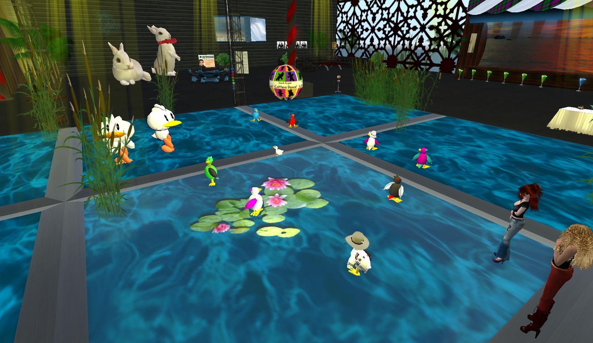 a-duck-dance-floor-is-a-pond