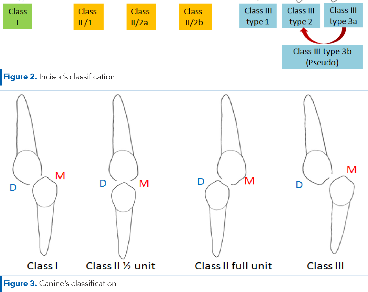 Orthodontics Classification Of Skeletal And Dental Malocclusion Revisited