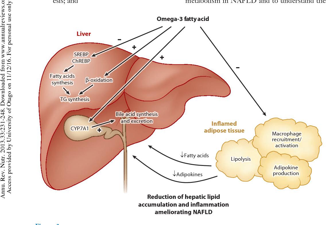 Figure 3 From Omega 3 Fatty Acids Hepatic Lipid