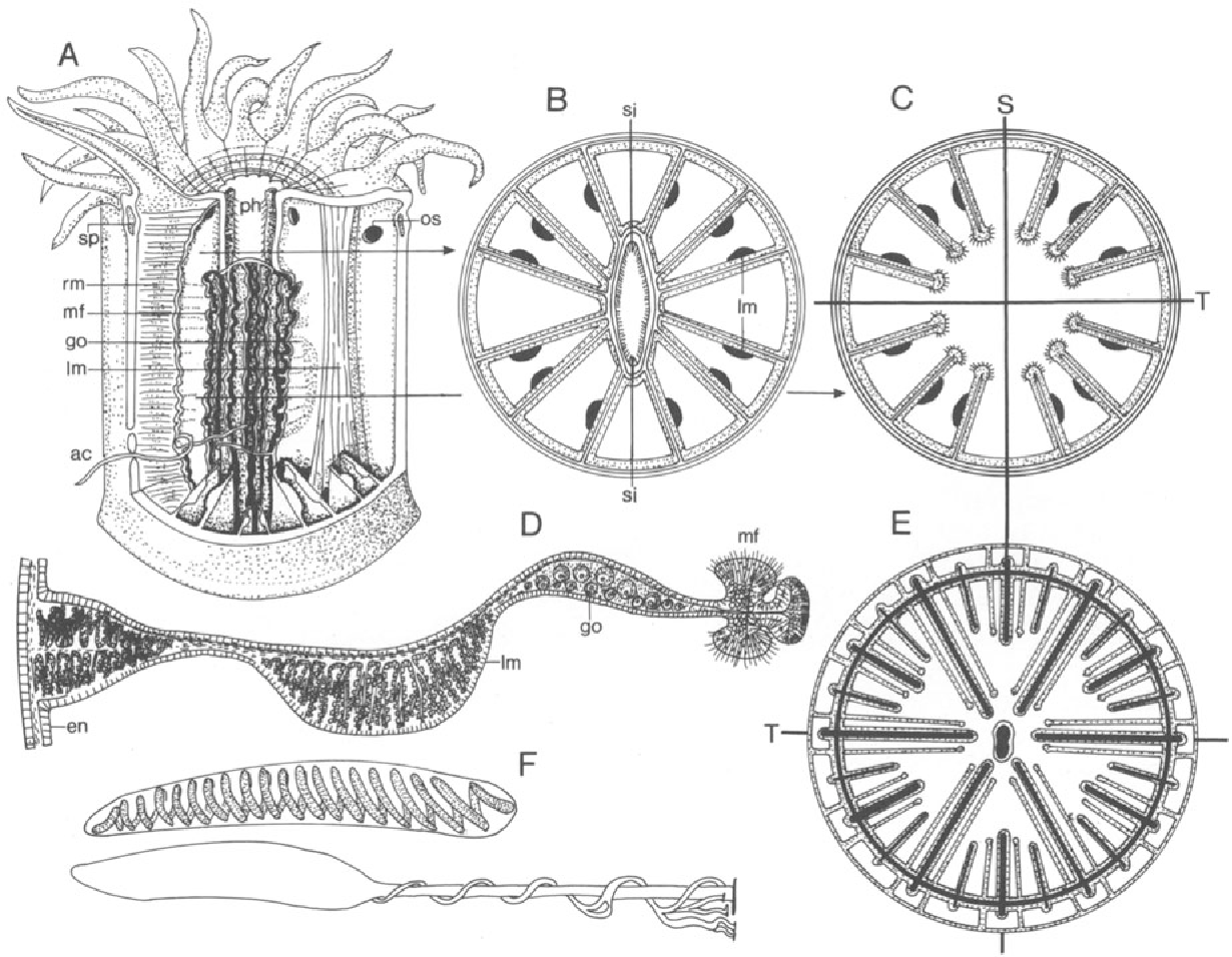 Figure 28 From Multicellular Animals