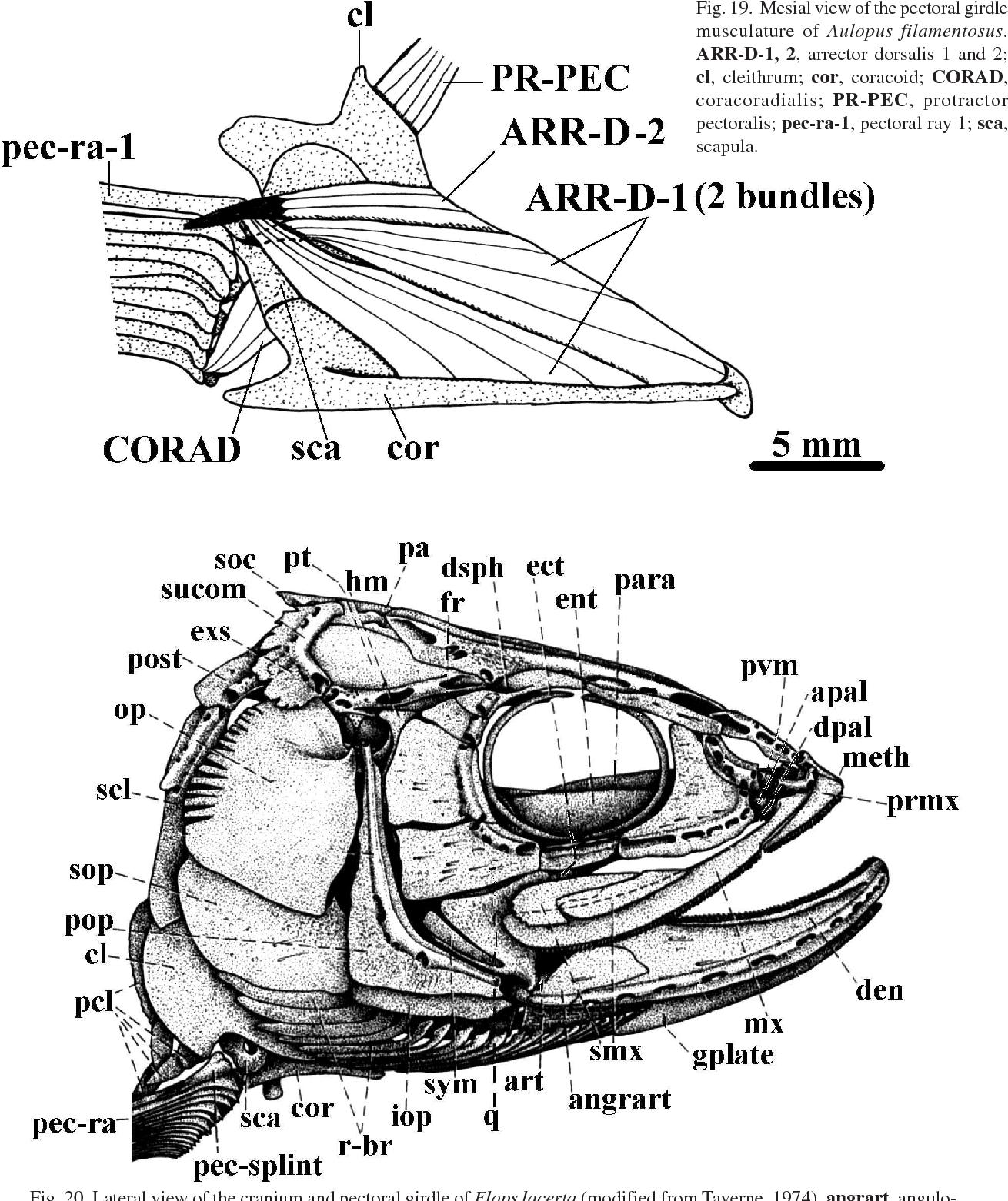 Diagram Of Pecs Schematic Diagram