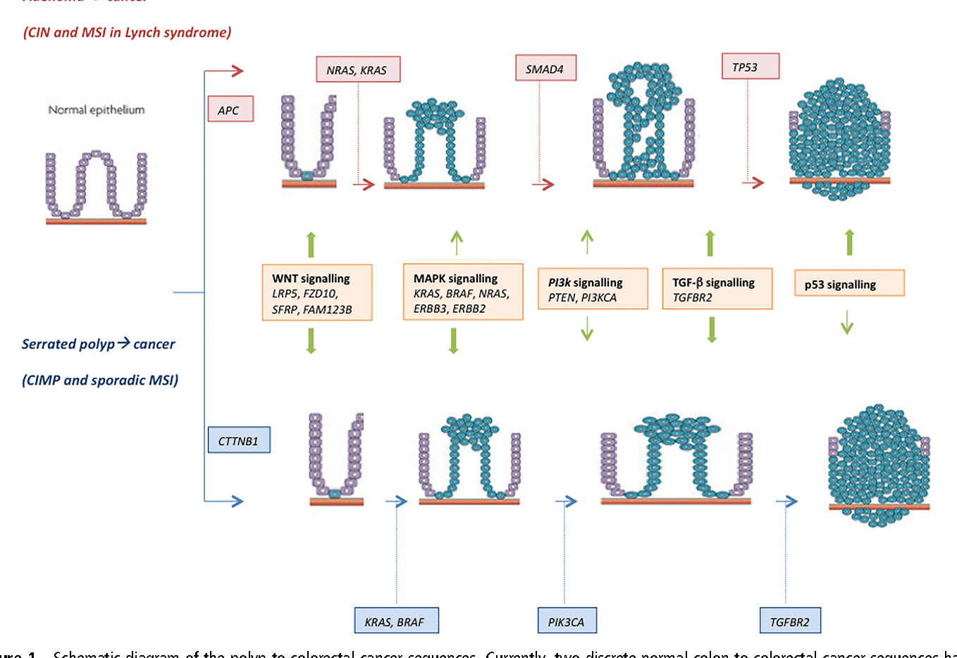 Figure 1 From Molecular Markers For Colorectal Cancer Screening
