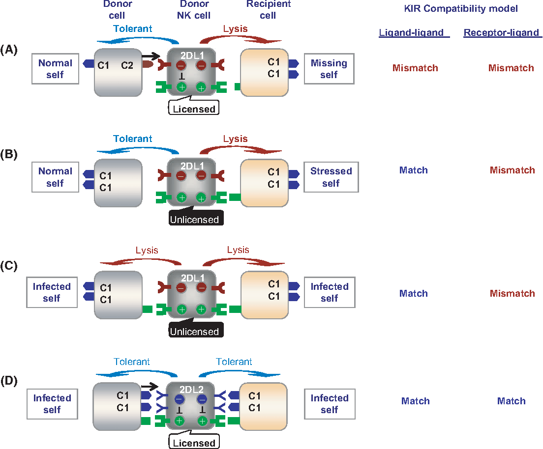 Figure 3 From Use Of Nk Cell Activity In Cure By Transplant