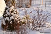 Talvine peenar (14.01.16)